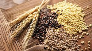 fuente alimentaria proteíca no animal, granos